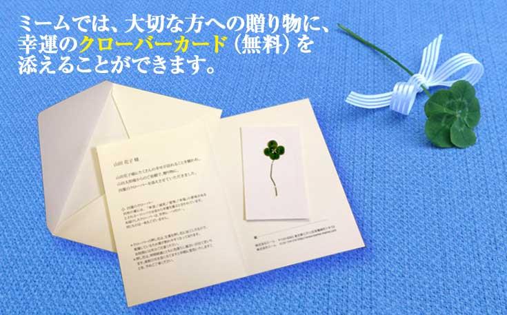 四つ葉や五つ葉のクローバーを押し花にしてあしらったミームオリジナルクローバーカードをお花に添えて贈り物に。
