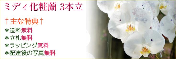 ミディ化粧蘭 3本立 商品一覧