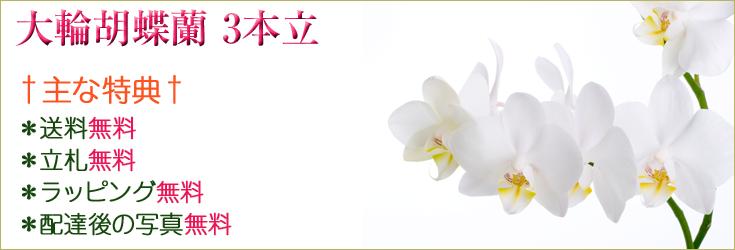 大輪胡蝶蘭3本立 商品一覧 フラワーギフト通販 ミーム