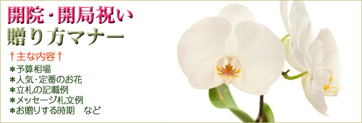 開院祝い・開局祝いの贈り方のマナー 胡蝶蘭、フラワー、観葉植物