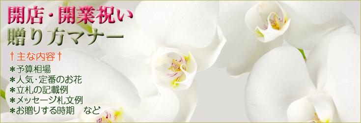 開店祝い・開業祝いの贈り方のマナー 胡蝶蘭、フラワー、観葉植物