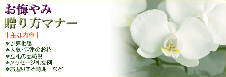 お悔やみの花の贈り方のマナー 胡蝶蘭、フラワー、観葉植物