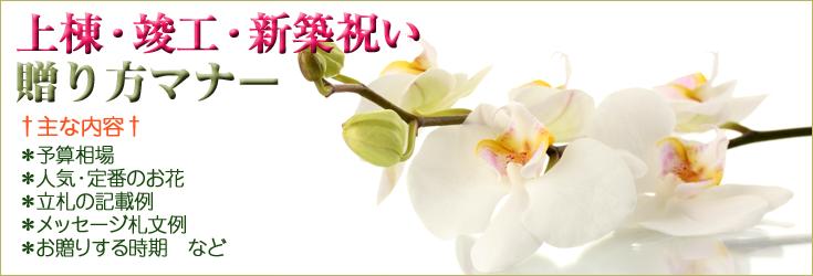 上棟祝い・竣工祝い・新築祝いの贈り方のマナー 胡蝶蘭、フラワー、観葉植物