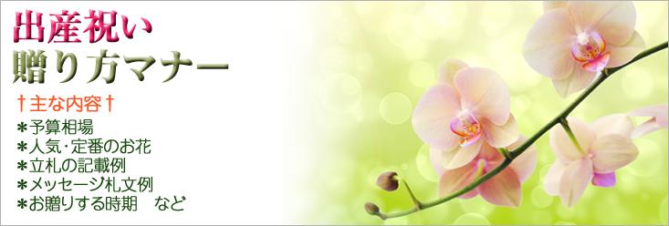 出産祝いの贈り方のマナー 胡蝶蘭、フラワー、観葉植物