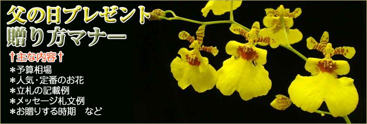 父の日のプレゼント贈り方のマナー 胡蝶蘭、フラワー、観葉植物