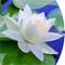 お悔やみの供花におすすめの贈り物 胡蝶蘭、フラワー、観葉植物