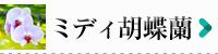 ミディ胡蝶蘭商品一覧|フラワーギフト通販ミーム