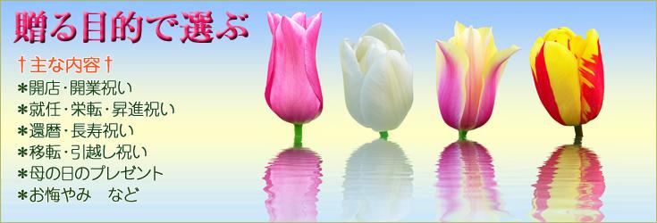 贈る目的別におすすめのお花をご紹介。胡蝶蘭、ミディ胡蝶蘭、洋蘭、観葉植物