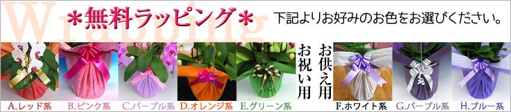ラッピング おぎの蘭園|フラワーギフト通販ミーム
