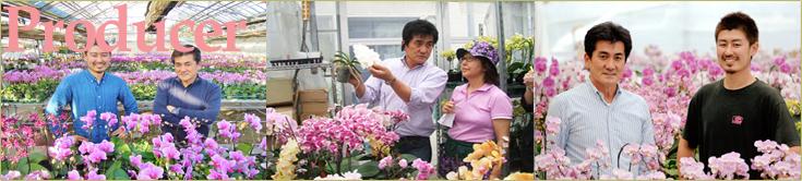 椎名洋ラン園 生産のこだわり ミディ胡蝶蘭専門産地、マイクロ胡蝶蘭